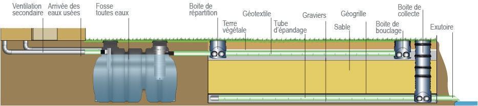 Fas draine 1